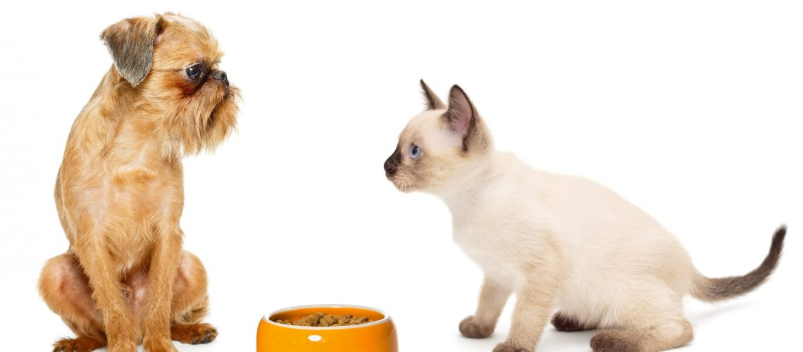 Kitten and puppy with a bowl of dry food isolated on white background